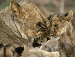 Little Puma, with his mother!
