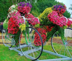 Flower cyclists.