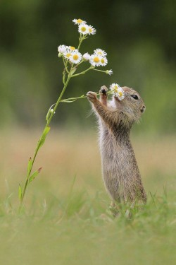 Everybody likes to smell a flower.